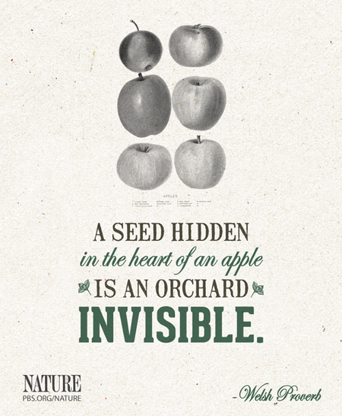 wpid-appleseed-2014-04-8-12-53.png